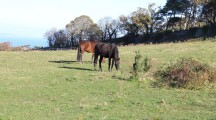 Hotel Development causing trouble for horse owners