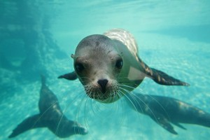 Image by- Dublin Zoo Facebook - Sea Lion Cove 1