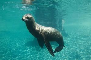 Image by- Dublin Zoo Facebook - Sea Lion Cove Dublin Zoo